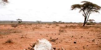 Ethiopian-drought