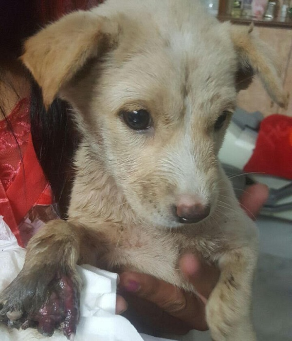 Pregnant Dog Attacked With Acid In Hyderabad