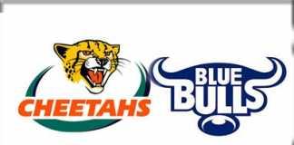 cheetahs-bulls