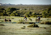 At the De Hoop Vlei MTB Experience, which is taking place from November 20 to 22, riders will be able to explore the hidden gems of De Hoop Nature Reserve, its beautiful open spaces, wildlife and terrain. Photo: Jacques Marais