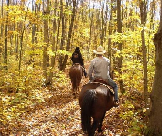 Horseback Jungle Safari Spells Thrill and Excitement! Choose from the following choices