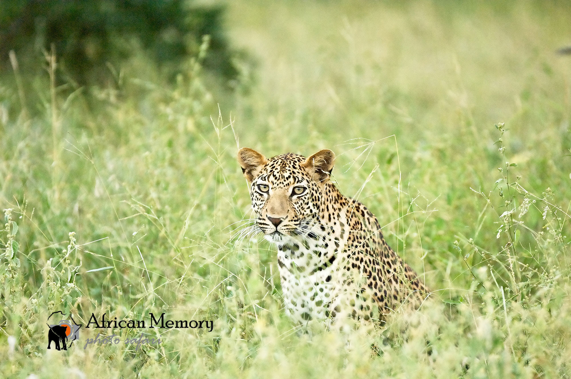 African-Memory-pilanesberg.jpg