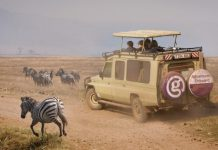 When to Plan a Tanzania Safari