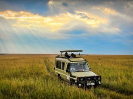 5 Things You Must Pack For Your Safari Trip (and Which Things to Leave at Home)