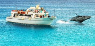 Choice of stunning whale watching tours & cruises in Brisbane