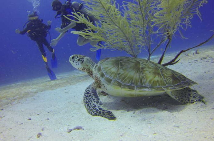Dispelling the myths surrounding why you shouldn't scuba dive