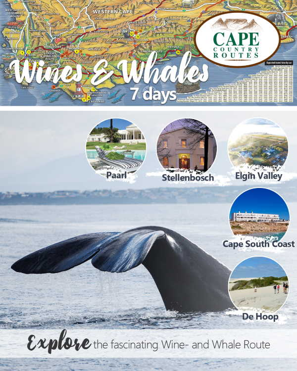 Cape Country Routes' stunning Wine and Whales 7-day Tour Package