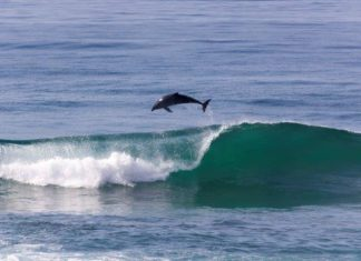 Spring-time wave-riding on the KZN South Coast