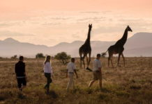 Samara Private Game Reserve joins a global community of leading nature-based tourism businesses advocating a sustainable tourism recovery post-COVID19