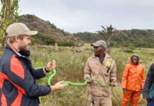 Mambas keep Crocworld staff busy on KZN South Coast