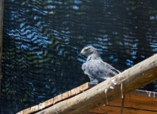 Crocworld birds enjoy new top-notch facilities