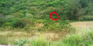 The bush where the rape occurred. Photo - Reaction Unit South Africa