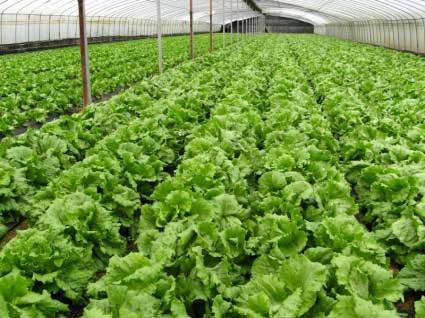 organic_farm_vegetables