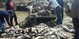 Ten-men-arrested-in-Vosman-Witbank-with-illegal-fish-worth-4-million-Rand