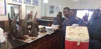 SAPS seeking information regarding poaching of three Rhinos. Photo: SAPS