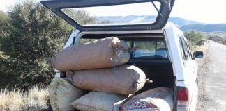 Two suspects in court for dagga valued at R158 400 in George. Photo: SAPS