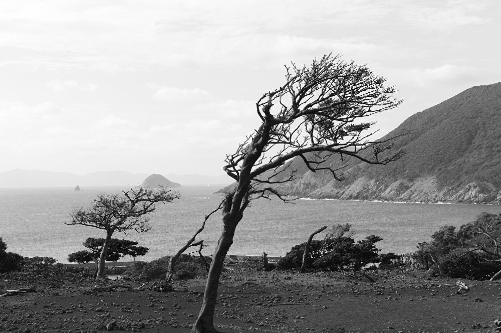 Nozaki is one of 17 volcanic islands off the north-west coast of Japan. The wind blows in off the Sea of Japan, stunting and shaping the trees