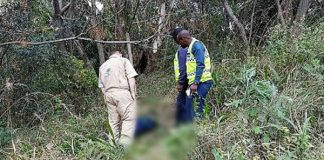 A woman found shot and dead in the bushes Photo: Arrive Alive