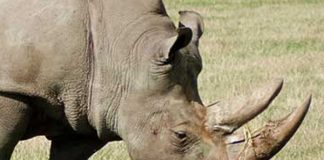 Rhino horns seized at OR Tambo Airport