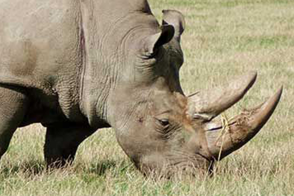 Rhino horns stolen from store room on game farm