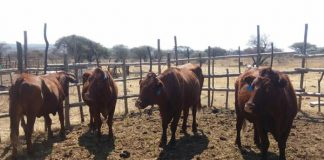 Stock theft operation yields good results. Photo: SAPS