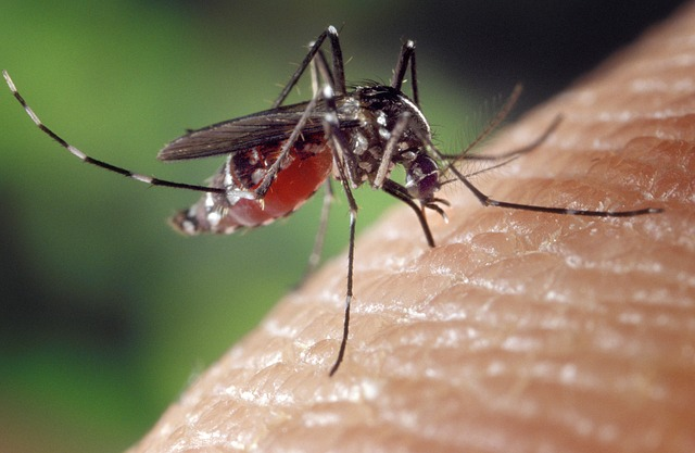Kruger visitors warned to guard against Malaria