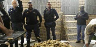 3 arrested with R1 million of abalone, Mfuleni. Photo: SAPS
