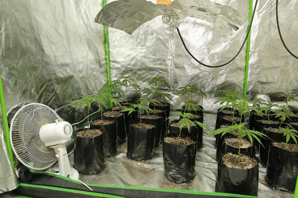 Hydroponic dagga lab uncovered, Gordon's Bay. Photo: SAPS