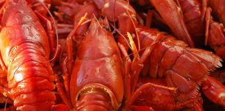 Sea Border police nab 7 for abalone and lobsters, Cape Town