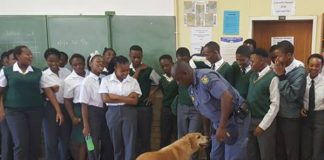 K9 unit, health department, search school for drugs, Westonaria. Photo: SAPS