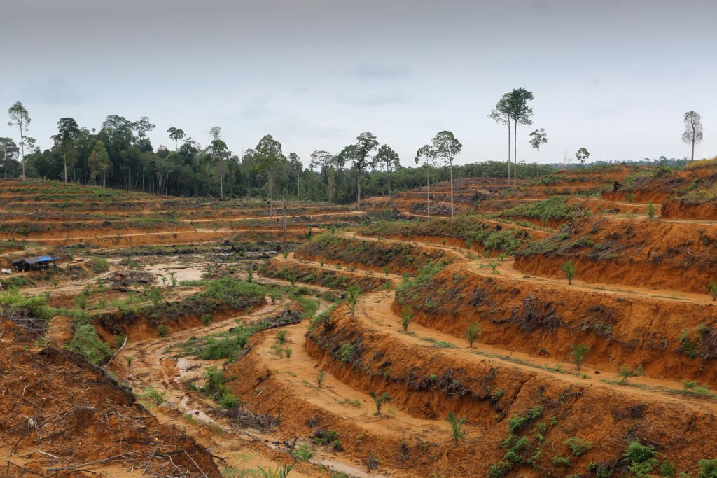 how deforestation risks for investors can become opportunities for