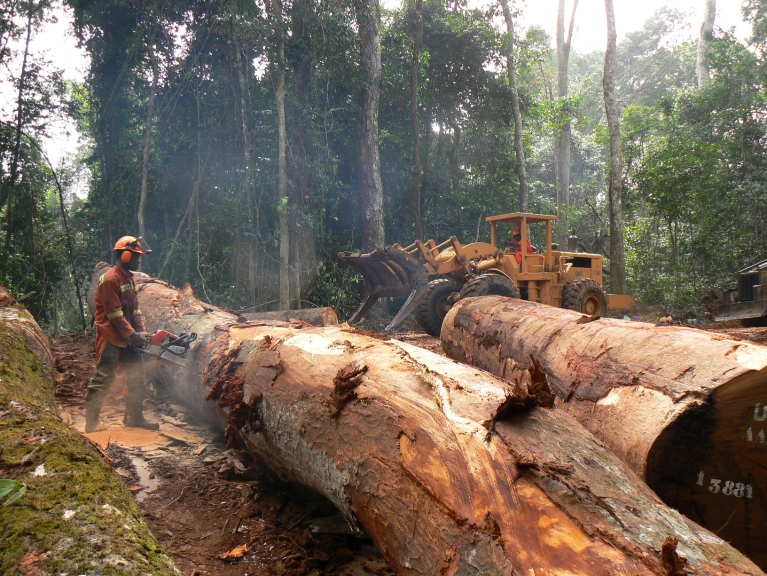 Timber harvest at a Forest Stewardship Council (FSC)-certified concession in Cameroon.
