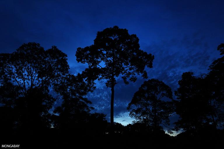 Rainforest at twilight in Borneo. Photo by Rhett A. Butler