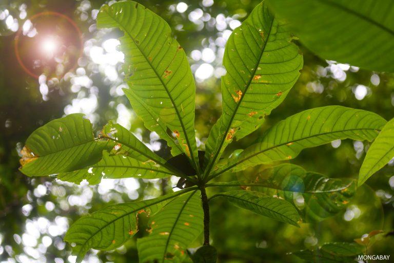 Tropical rainforest in Borneo. Photo by Rhett A. Butler