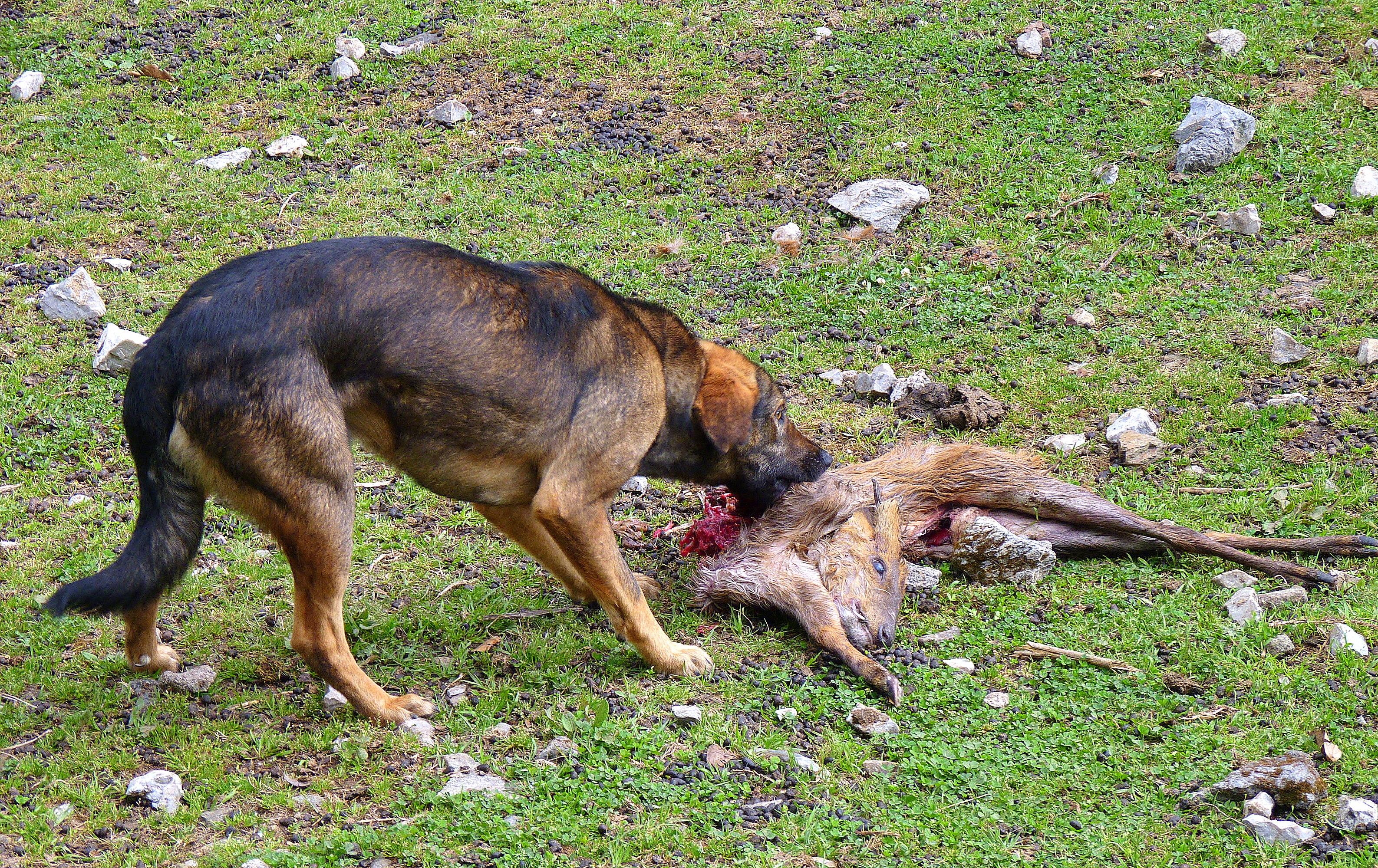 Dog Barking Laws Toronto