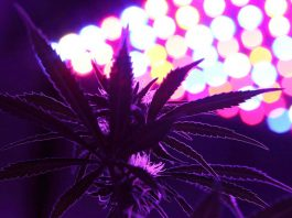 led-grow-lights-looking-up