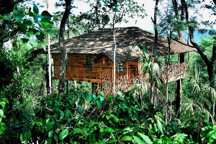 Tree House In Kerala.jpg