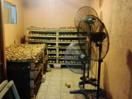 Abalone worth R3.5 million seized in Ottery. Photo: SAPS