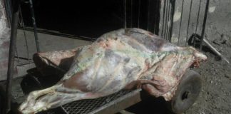 Seven tons of meat hijacked, truck recovered, seven arrested. Photo: SAPS