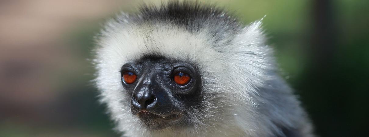 Madagascar S Threats To Food Security