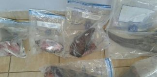 Horrific scene of six rhino horns poached, accused to appear in court. Photo: SAPS