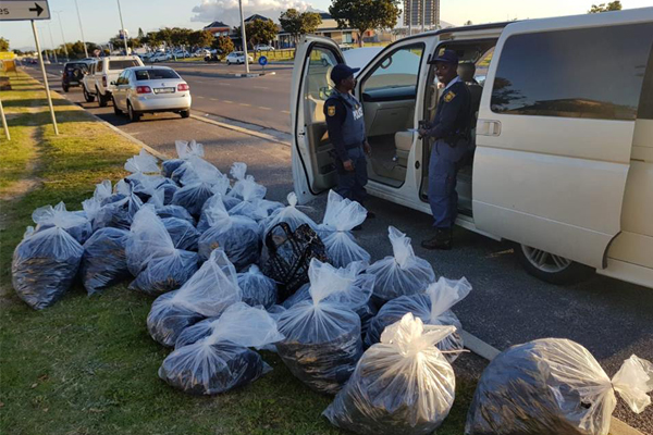 Bothasig roadblock uncovers 37 bags of abalone, 3 arrested. Photo: SAPS