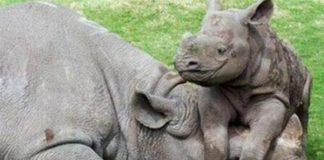 Kruger National Park rhino poachers sentenced