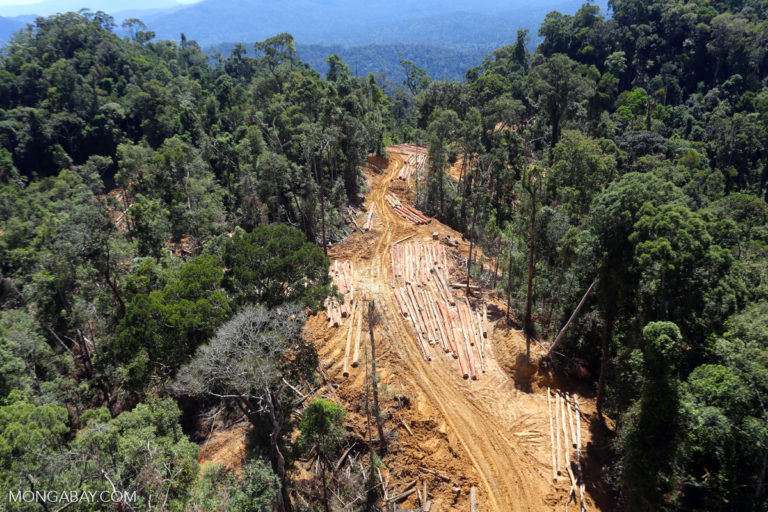 Deforestation and forest degradation is the second largest source of greenhouse gas emissions from human activities. Photo by Rhett A. Butler.