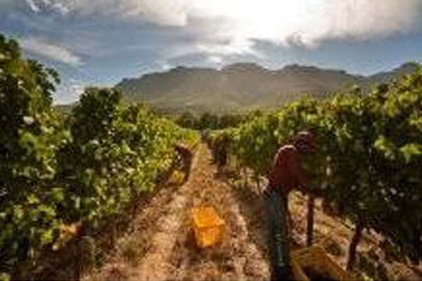 Court order ignored, shacks go up on wine farm again, WC. Photo: Die Vryburger
