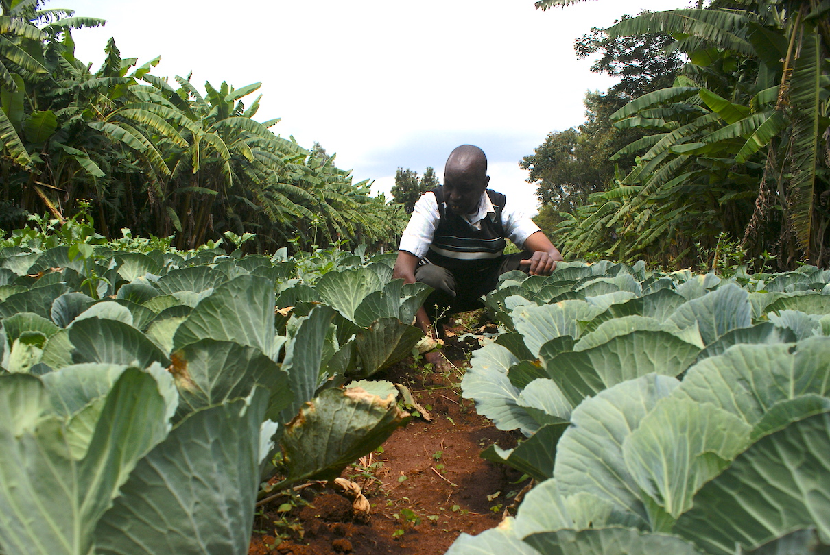 Farmers see promise and profit for agroforestry in ...