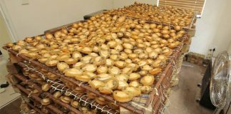 R4.5 million worth of abalone seized, Kraaifontein. Photo: SAPS