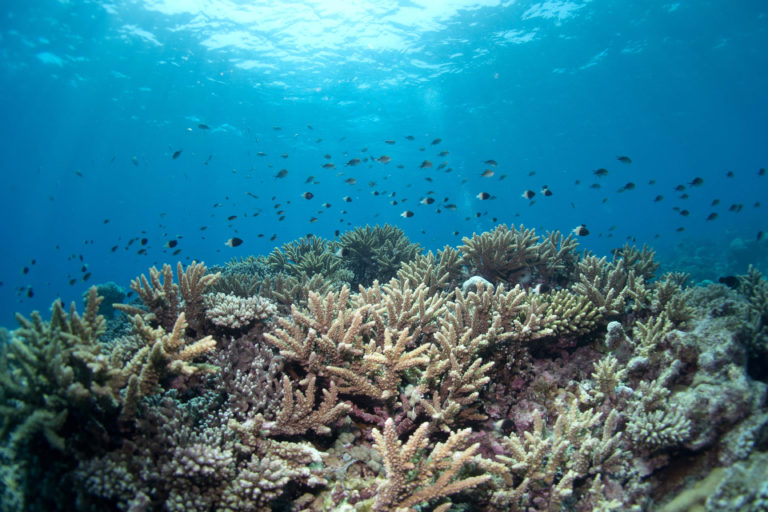 A coral reef system along the coast of northern Mozambique, one of nearly 300 coral reefs in the Western Indian Ocean examined by researchers from the Wildlife Conservation Society and other organizations in a 10-year study that focused on coral diversity and rates from bleaching events. Photo credit: Emily Darling/WCS.