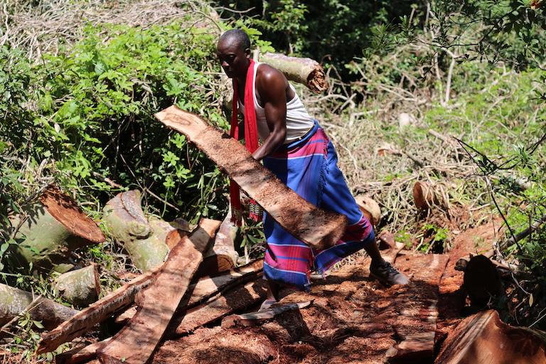 Elder Mwanza Mwangiri assesses the timber left behind by illegal loggers at Kaya Kauma. Image by Sophie Mbugua for Mongabay.