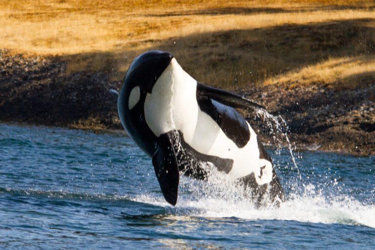Big whale forex